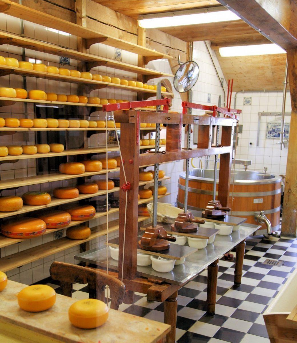 Potravinářská výroba - sýry